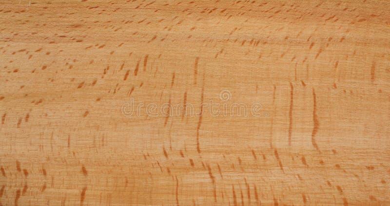 Beech wood texture royalty free stock photo