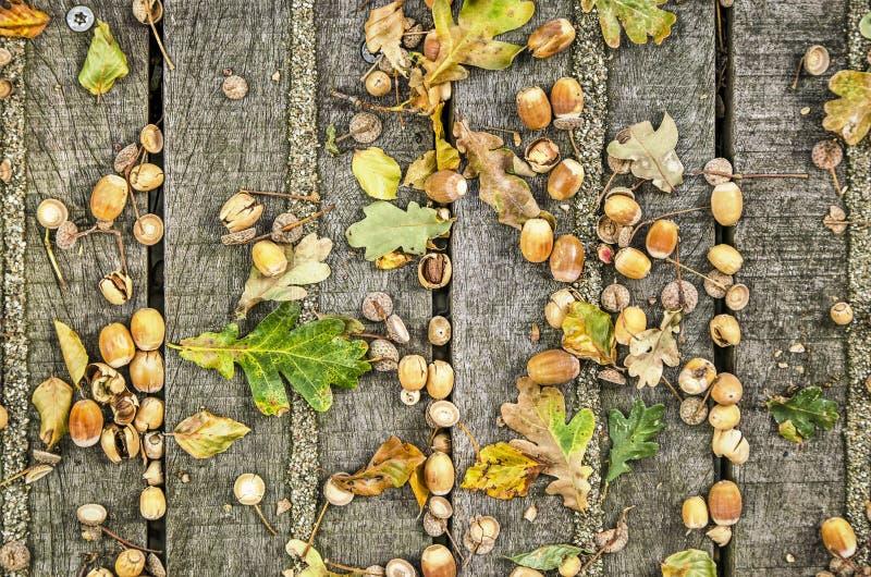 Beechnuts на деревянной платформе стоковая фотография
