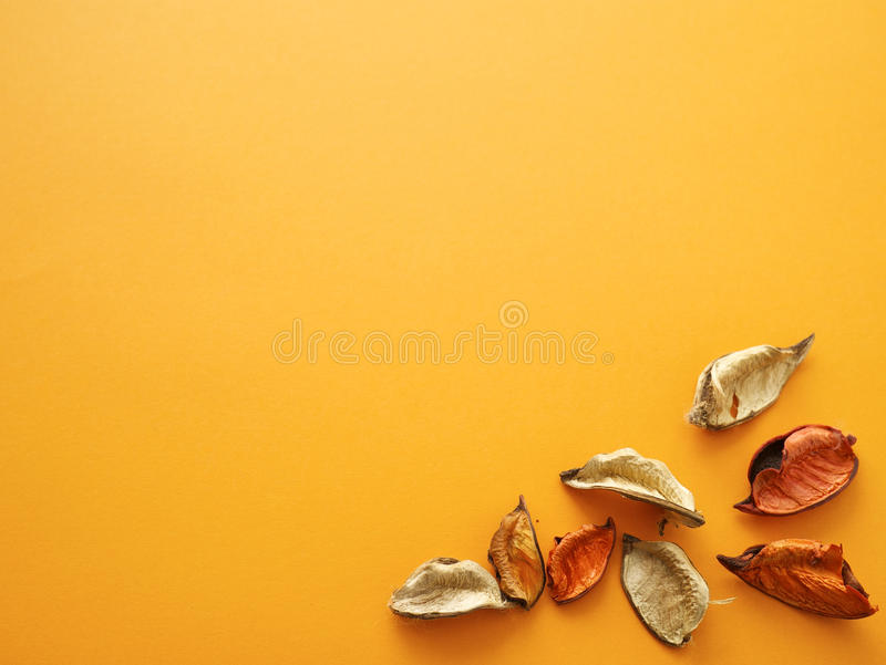 Beechnuts на оранжевой предпосылке стоковые изображения rf