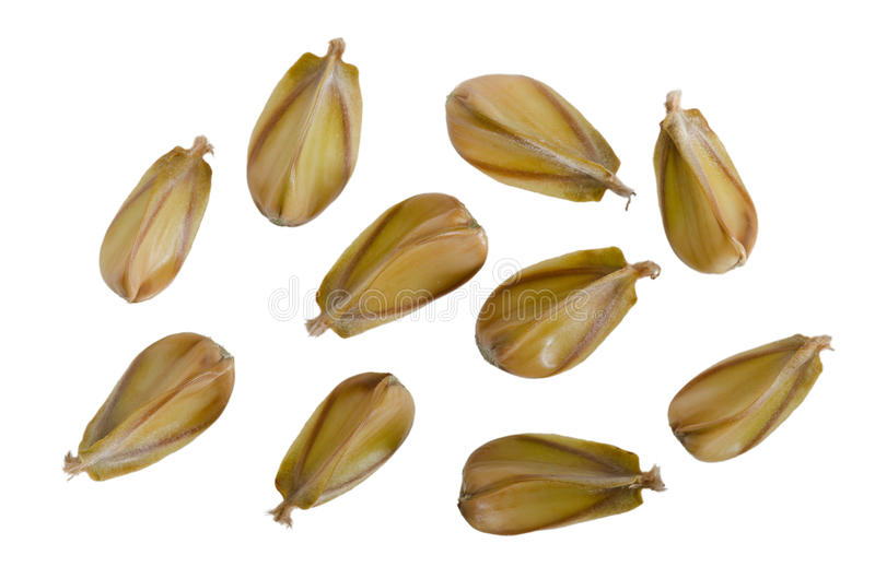 beechnuts стоковые фото