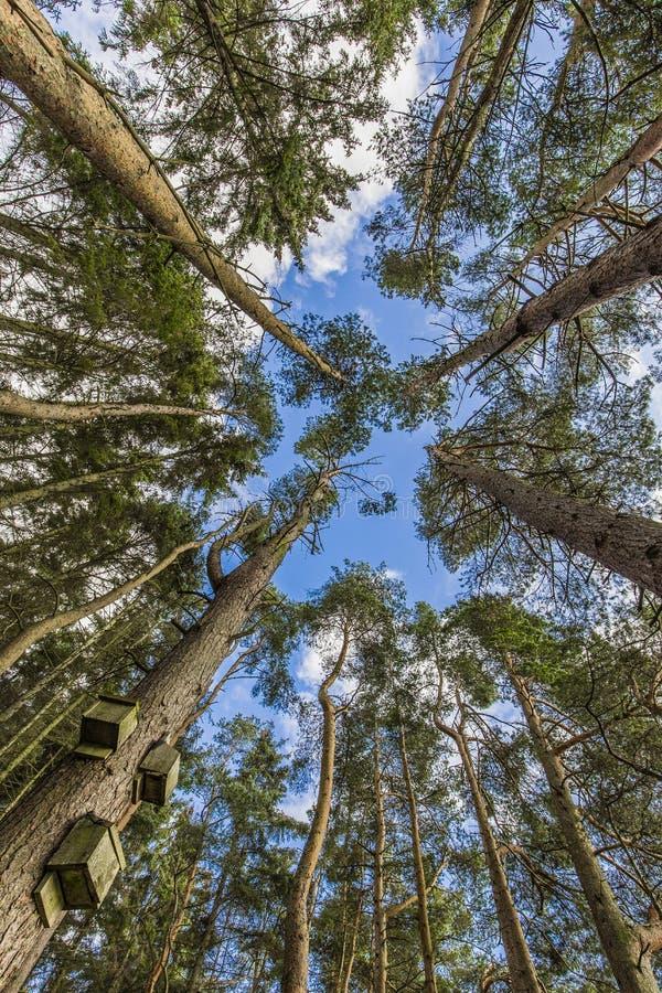 Beecraigs kraju park zdjęcia stock