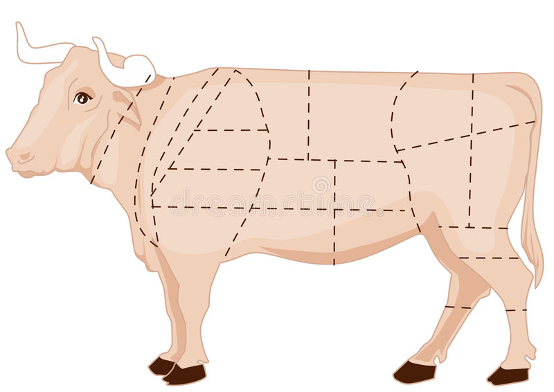 Beef chart. Butchery beef chart, cattle meat cuts vector illustration