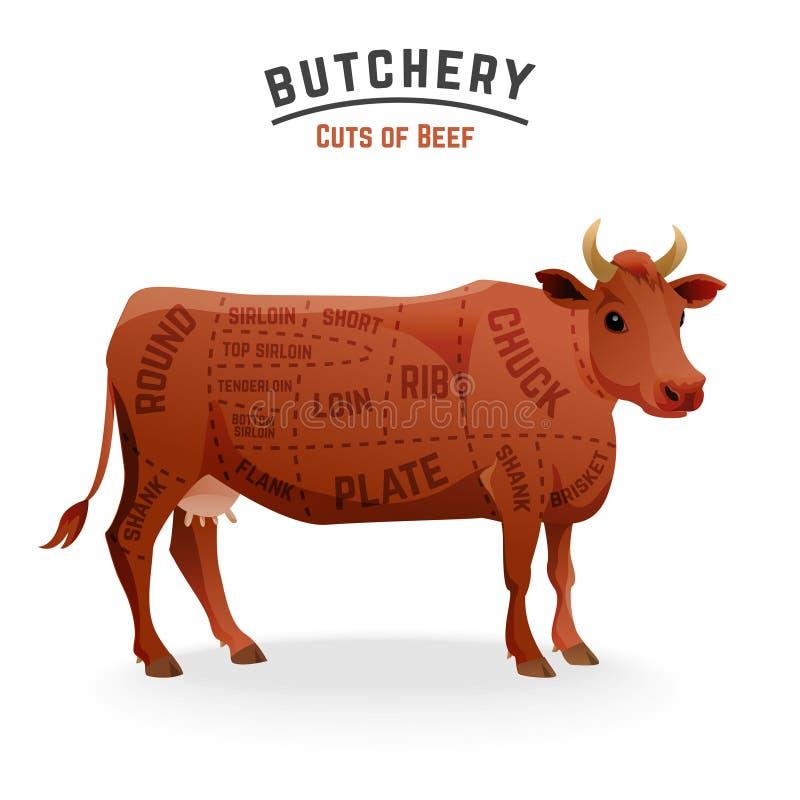 Beef cuts diagram. Butchery beef cuts diagram . Vector Illustration royalty free illustration