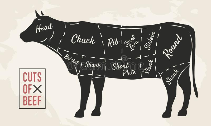 Meat cuts. Beef cuts. Vintage Poster for Restaurant or butcher shop. Retro diagram. Vector illustration. royalty free illustration