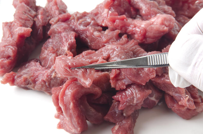 Beef is examined in a food laboratory royalty free stock photos
