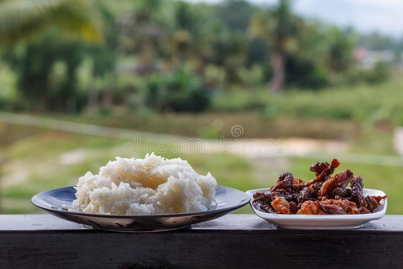 Beef stir fry white rice  delicious close up meal. Beef stir fry white rice delicious close up meal royalty free stock photos