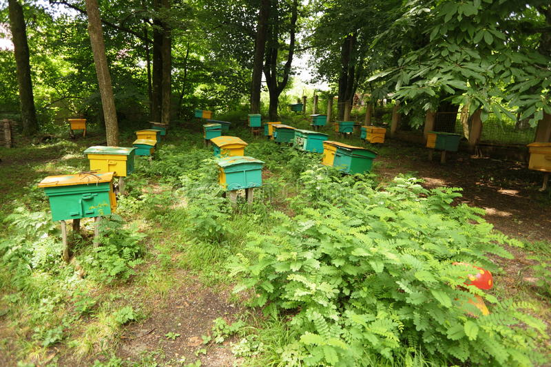 Download Beegarden. A Few Beehives In A Shadow Of A Threes. Stock Photo - Image: 13301392
