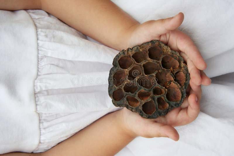 Beehive stock image