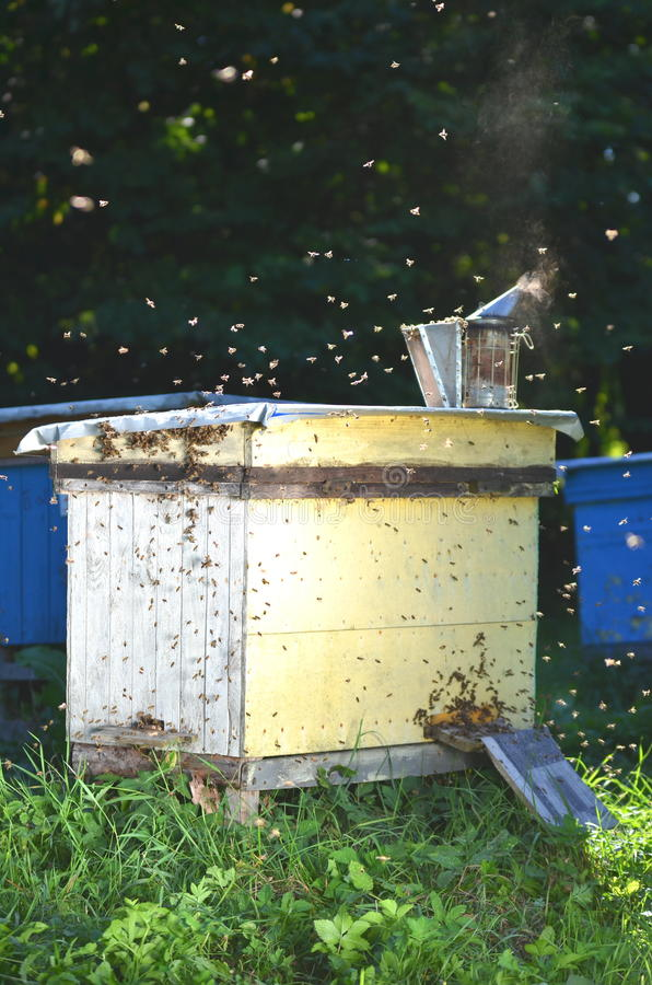 Download Beehive In Apiary Royalty Free Stock Images - Image: 33474589