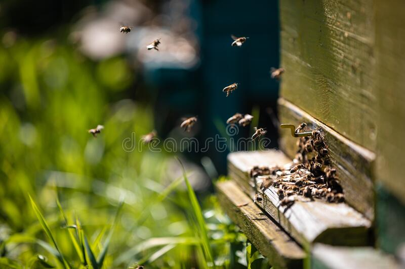 Beehive and bees over honey farm stock photos
