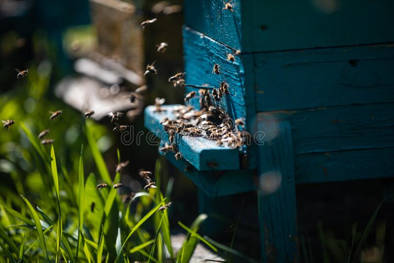 Beehive and bees over honey farm royalty free stock photography