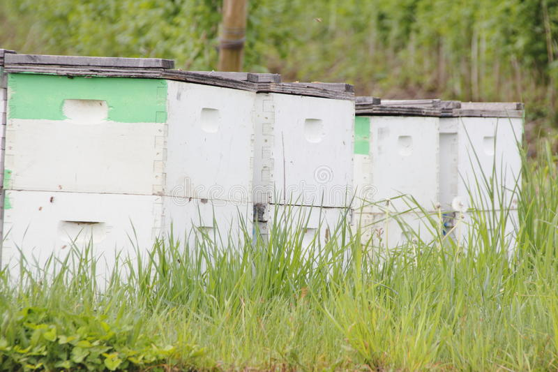 Download Beehive Boxes In Washington State Stock Photo - Image: 40508966