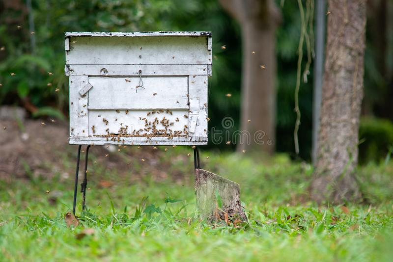 beehive foto de stock royalty free
