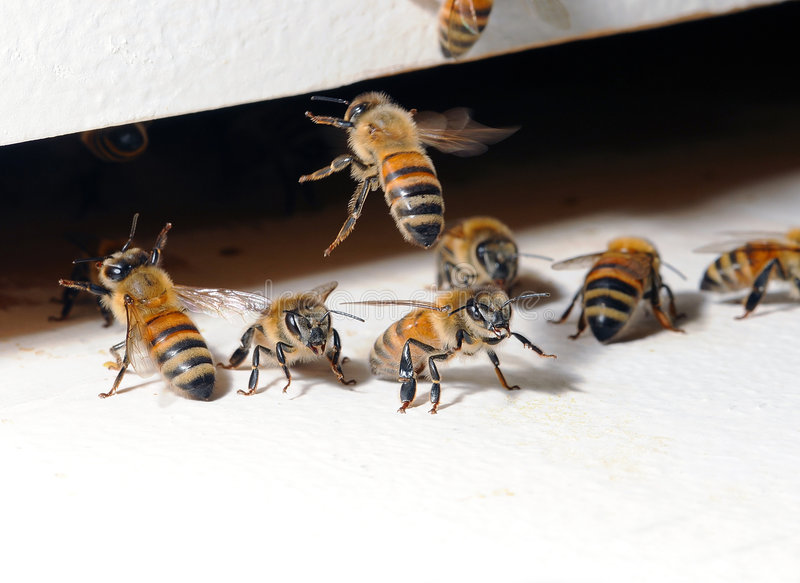 Download Beehive entrance stock image. Image of details, group - 5829845