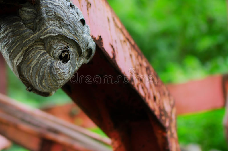 Beehive on farm equipment. A Beehive on rusty red farm equipment royalty free stock images