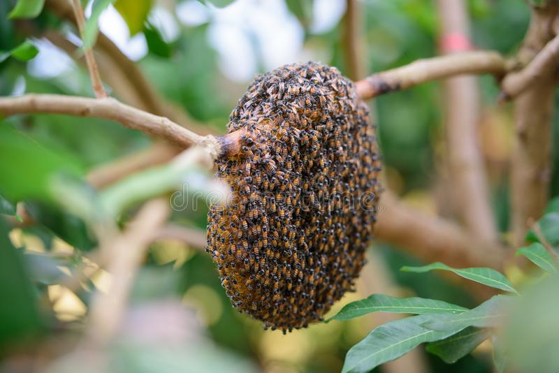 Beehive royalty free stock photos