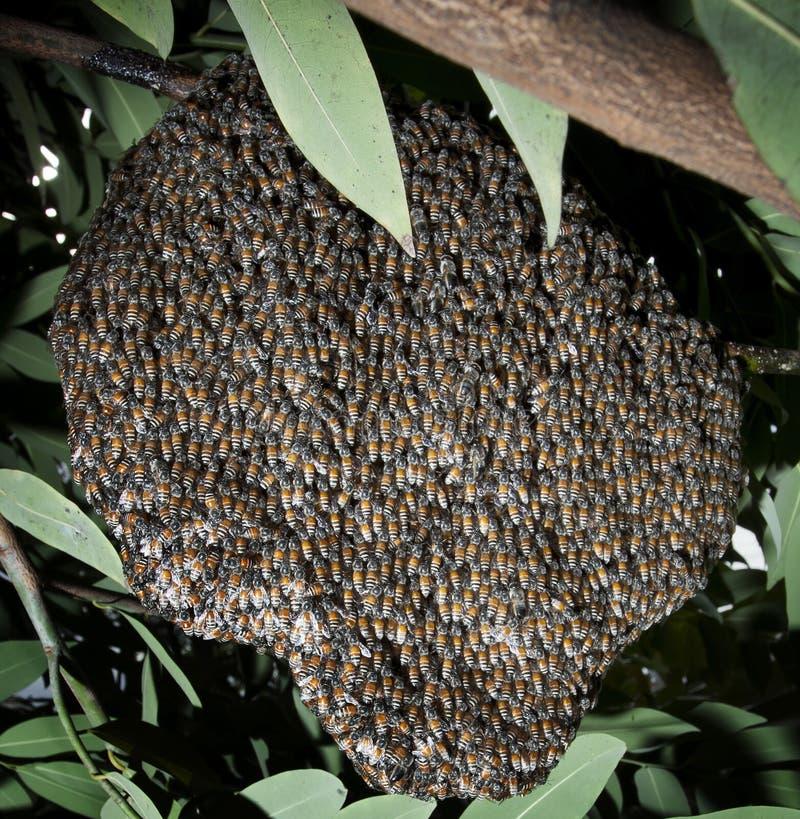 Free Beehive On Tree Bush Stock Image - 33139501