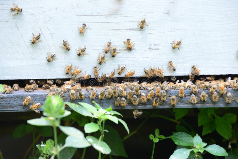 Download Beehive stock photo. Image of summer, agriculture, insects - 39265178