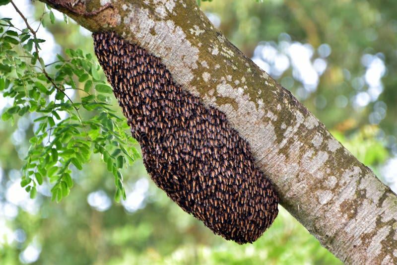 Beehive till naturen royaltyfria bilder