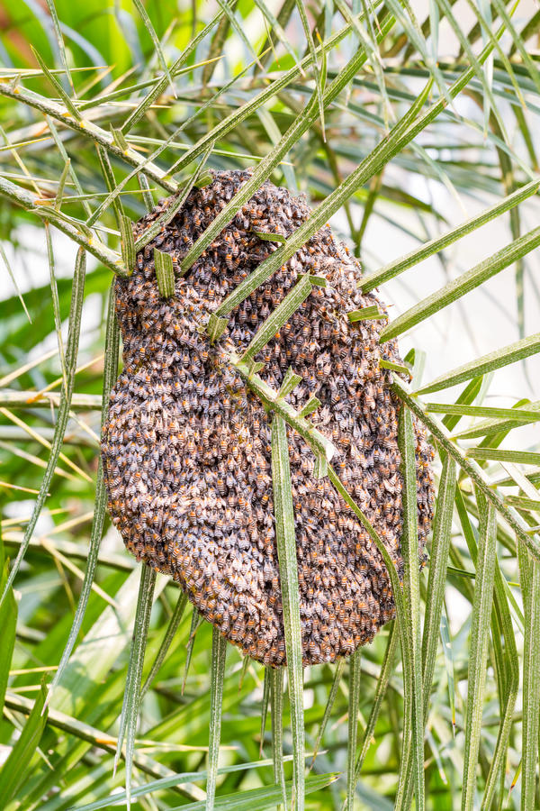 Download Beehive On Tree Stock Photo - Image: 39247470