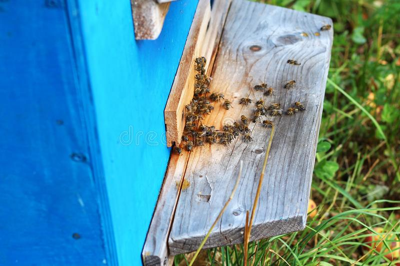 Beehive with worker bees in the garden royalty free stock photos
