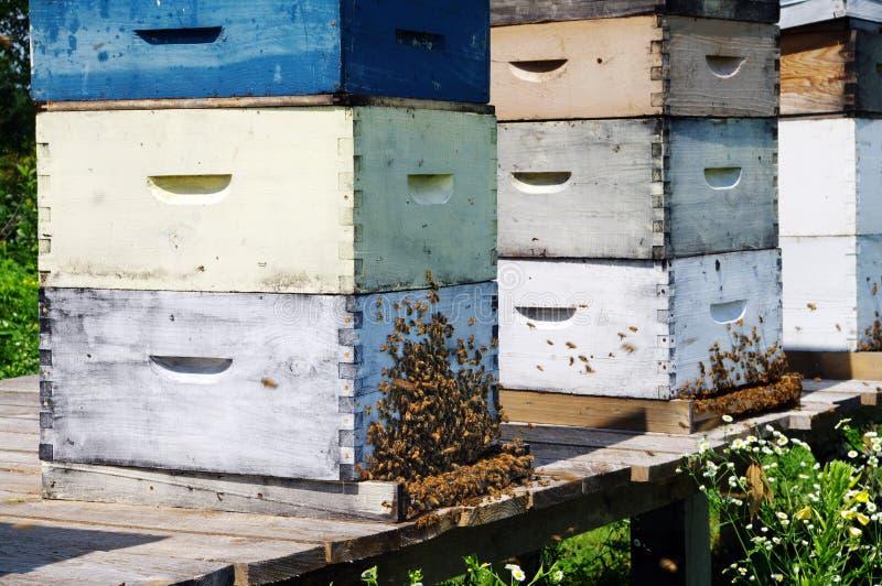 Download Beehives stock photo. Image of swarm, honeybee, beehive - 26055568