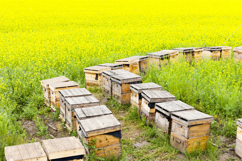 Download Beehives Royalty Free Stock Images - Image: 27544589