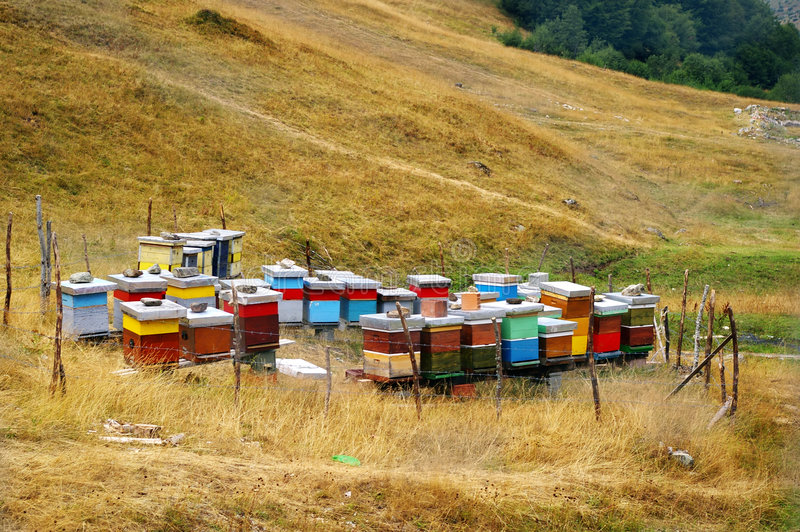 Beehives royalty free stock photography
