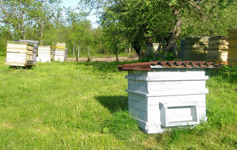 Download Beehives stock photo. Image of nature, honey, leafy, trees - 5239312