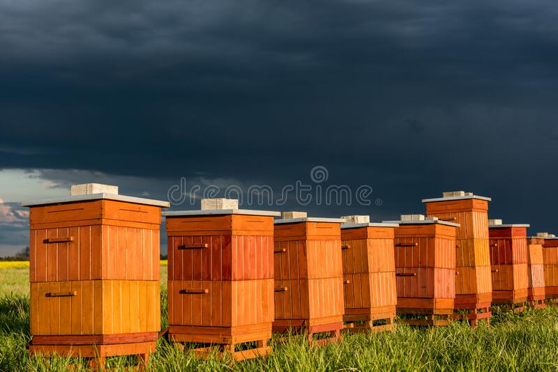 Beehives in Apiary. Bio Honey Production and Beekeeping Concept stock images