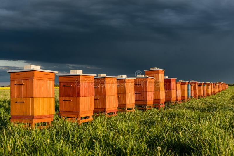 Beehives in Apiary. Bio Honey Production and Beekeeping Concept royalty free stock photos