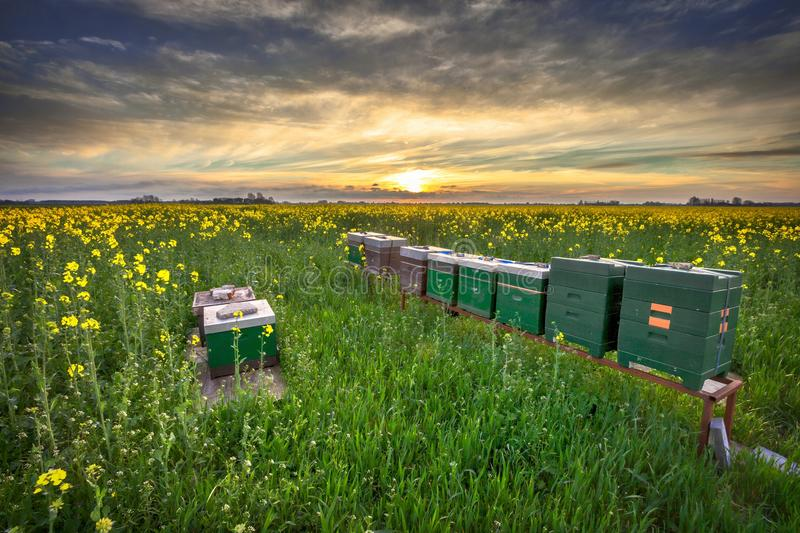 Beehives in a field stock photography