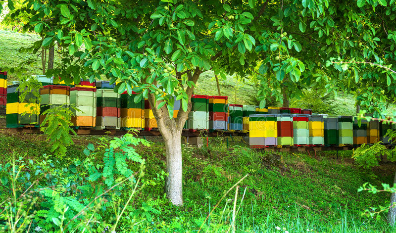 Beehives in the forest stock photos