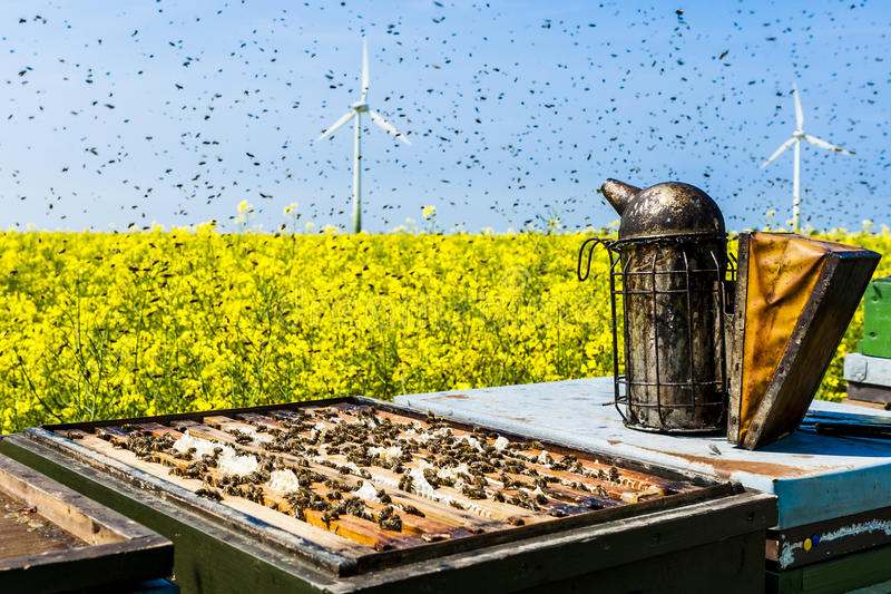 Beehives on rapeseed field with bee swarm royalty free stock image