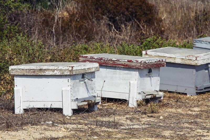 Beehives Relocating Bees. White Beehives, bees al work royalty free stock photography