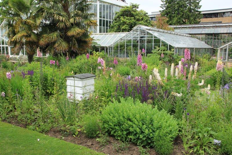 Beehouse et digitale de floraison dans le jardin au printemps photo stock