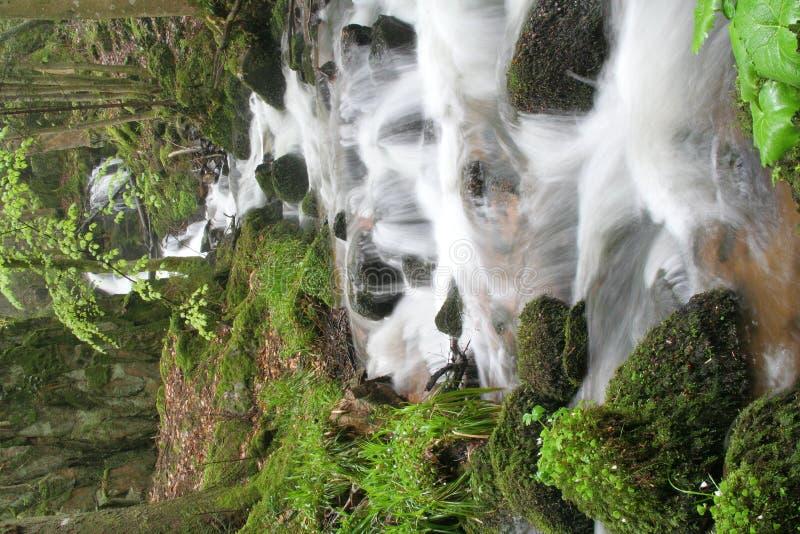 Beek in bos stock afbeelding