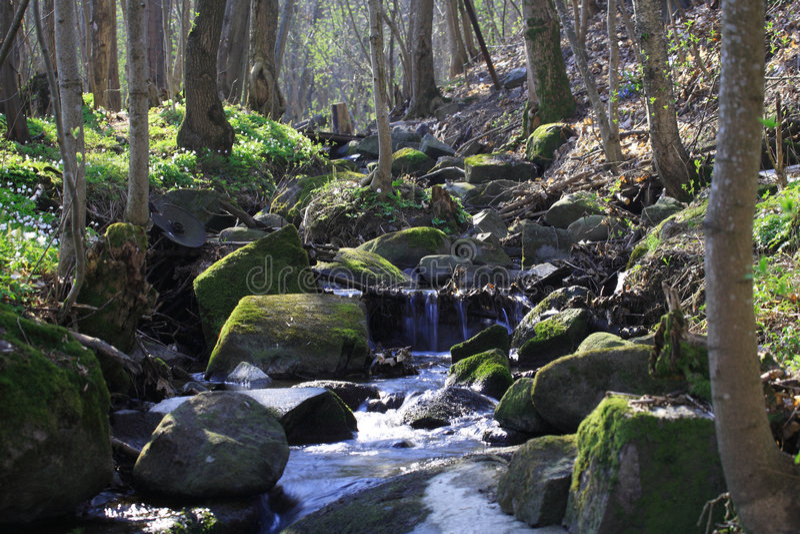 Beek in een bos stock afbeeldingen