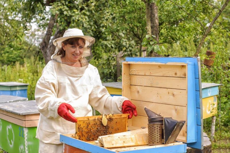Beekeeper женщины смотрит после пчел стоковые изображения rf