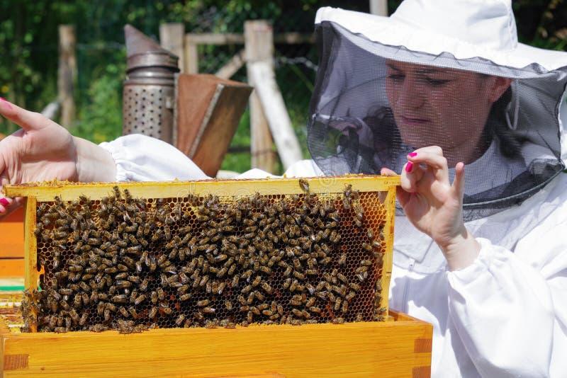 Beekeeper женщины с пчелами стоковое изображение