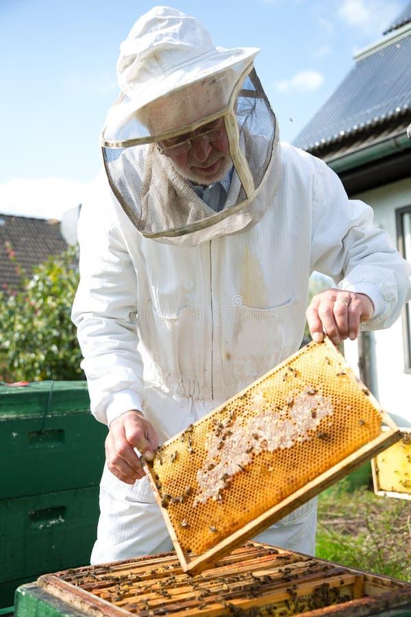Beekeeper заботя для колонии пчелы стоковые фотографии rf