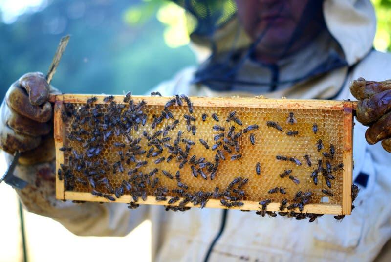 Beekeeper и пчелы стоковое изображение