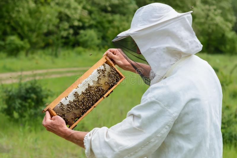 Beekeeper принимает вне от сота крапивницы заполненного с свежим медом Apiculture стоковое фото