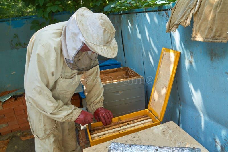 Beekeeper принимает вне рамку стоковая фотография