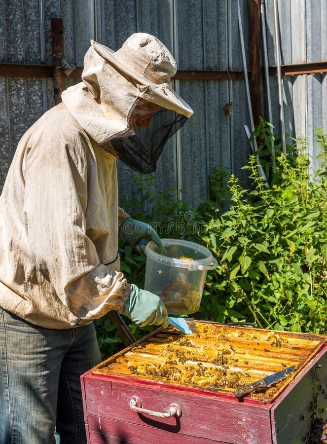 Beekeeper принимает вне сот от крапивницы стоковые изображения rf