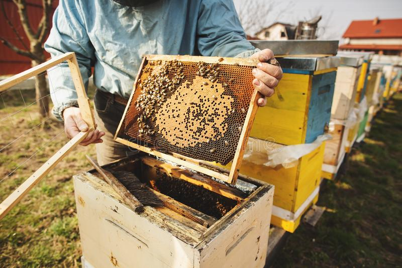 Beekeeper работает с пчелами и ульями на пасеке стоковая фотография rf