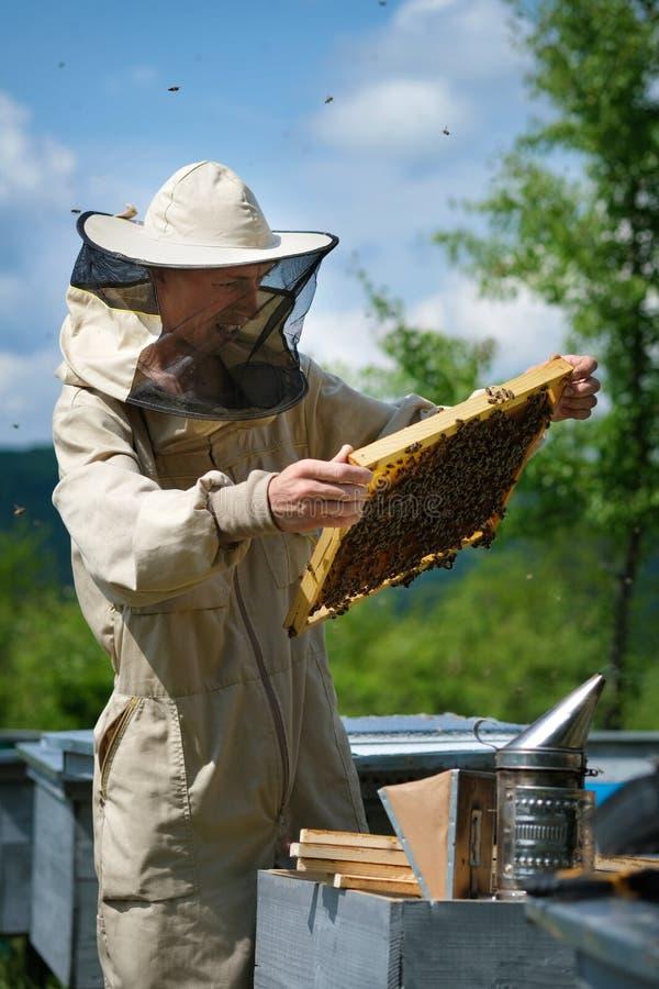 Beekeeper работая для того чтобы собрать мед r Концепция пчеловодства стоковые фото