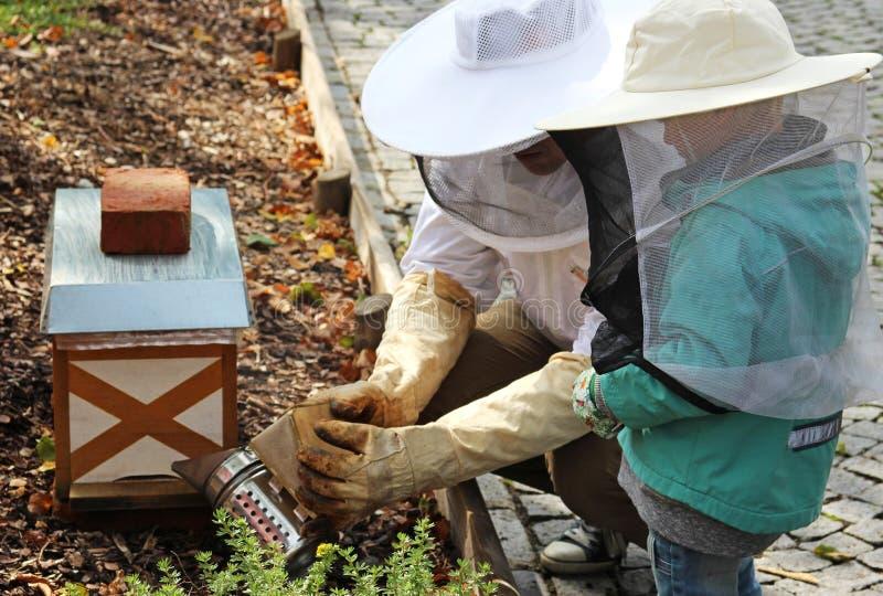 Beekeeper уча мальчику как произвести дым для того чтобы утихомирить пчел стоковое фото