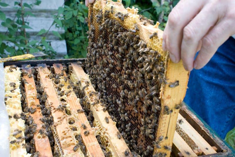 Beekeeper #1 стоковое фото rf