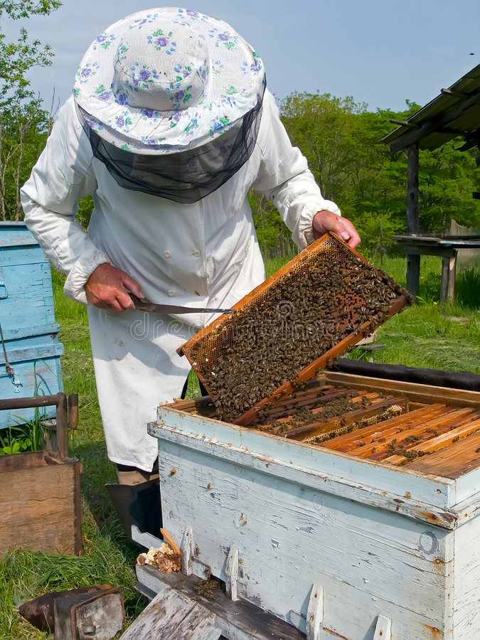 beekeeper 12 стоковое фото